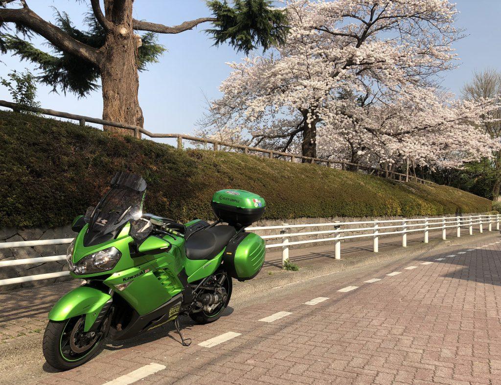 sakura and GTR